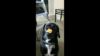 Dog Trick gone wrong