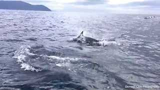 What It's Like to Follow Dolphins in a Speeding Boat - Video