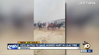 Horse injured in Lilac Fire undergoing treatment - Video