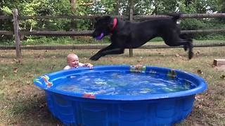 A Baby Girl Gets Splashed When A Dog Jumps Into A Pool - Video