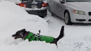 Dogs Run Laps Through Erie Record Snowfall - Video