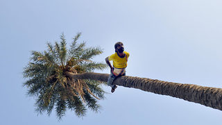 Indian man has 'unusual' passion of climbing trees upside down - Video