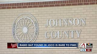 Bat tests positive for rabies in Johnson County, Kansas - Video