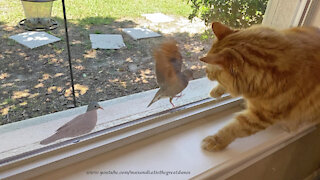 Great Dane And Squirrel Watch As Funny Birds Tease The Cat