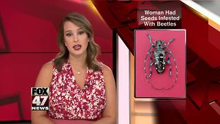 Seeds infested with beetles found at DTW - Video