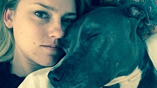 Snuggling with a pitbull  - Video