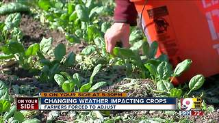 Local farmers struggle to save crops amid temperature changes - Video