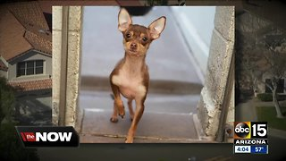 Animals up for adoption after being found in deplorable conditions