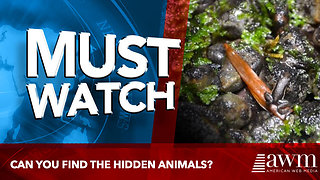 Can you find the hidden animals? - Video