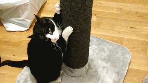 Cats instantly love their Christmas present