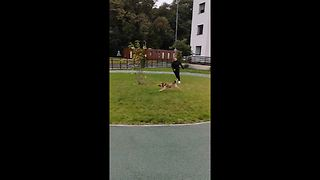 Owner Tries To Exercise Her Dog But Ends Up Being Vice Versa - Video