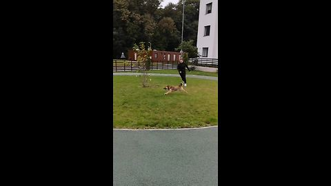 Owner Tries To Exercise Her Dog But Ends Up Being Vice Versa