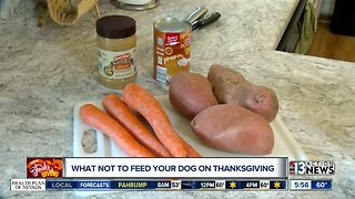 What not to feed animals during holidays