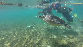Swimmer rescues turtle trapped by rope at beach in the Philippines