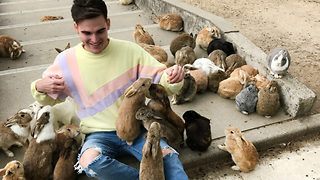 Rabbit island – Holiday resort for bunnies - Video