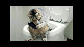THESE CAT VIDEOS WILL HAVE YOU DYING !