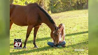 Reward offered in investigation of horse shootings - Video