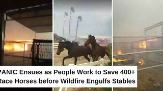 Panic Ensues as People Work to Save 400+ Race Horses before Wildfire Engulfs Stables - Video