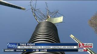 Coalition works to save ash trees in Omaha