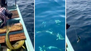 Incredible Footage Shows Sailors Feeding Wild Pod Of Dolphins - Video