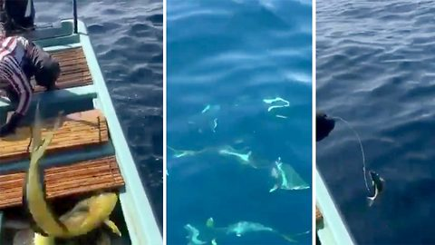 Incredible Footage Shows Sailors Feeding Wild Pod Of Dolphins