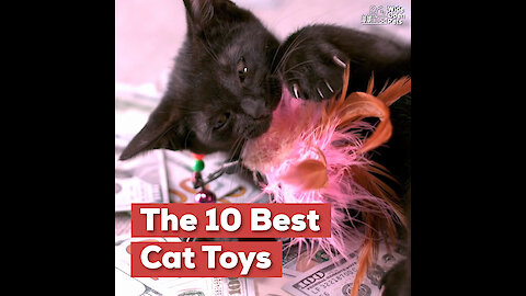 The 10 Best Cat Toys