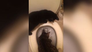21 Potty Training Cats - Video