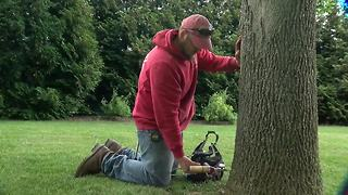 How to save your ash trees - Video