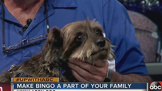 Rescues in Action 11/19: Say hello to Bingo - Video