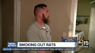 Valley company offering unique way to remove rats from homes - Video