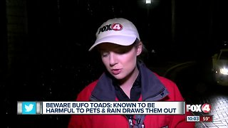Toxic cane toads pose deadly threat to pets in Southwest Florida