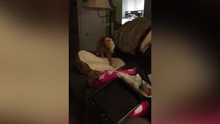 Cat Gets Stuck Inside Bag of Chips - Video