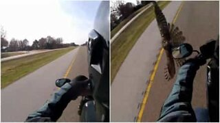 Falcon almost collides with motorcyclist!