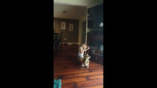 Diva cat hates being upstaged by little girl - Video