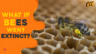 What If Bees Went Extinct ?
