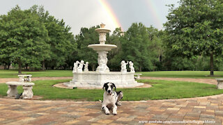 Great Dane Relaxes Under Florida Double Rainbow