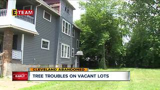 Properties at risk of damage from nearby trees leaning over or falling from abandoned properties - Video