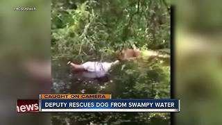 Deputy rescues dog from swampy water - Video