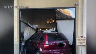 Car crashes into Las Vegas dog groomer business - Video