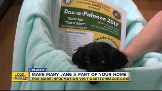 Oct. 28 Rescues in Action: Mary Jane needs forever home - Video