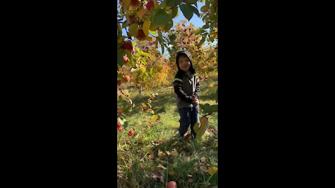 Apple picking with my boi