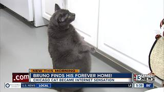 Fat cat Bruno now has a forever home
