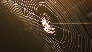 Why You Should Think Twice About Killing Spiders - Video