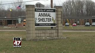 Jackson County without animal control - Video