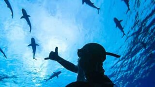 Diver films tense encounter with tiger shark