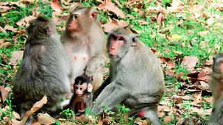Monkey Family At Angkor Thom Cambodia
