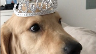 I'm a King! Not a princess - Video
