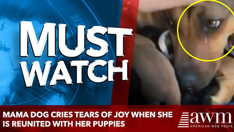 Heartbroken Mama Dog Cries Tears Of Joy When She Is Reunited With Her Puppies