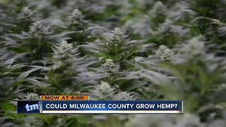 Growing hemp at Mitchell Park greenhouses could net millions