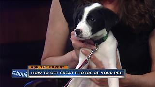 Ask the Expert: Picturesque pets - Video